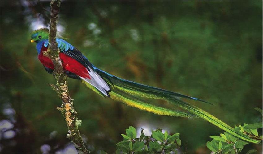удивительная птичка